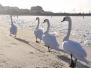 Ptaki, plaża